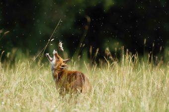 Exposition de photographie animalière par Jacky Montassier